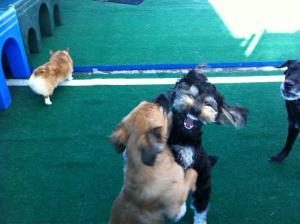 dog friendly savannah, savannah dog, pet services savannah, pet friendly vacation savannah, pet friendly savannah