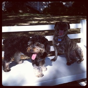 pet friendly savannah, what to do with my dog savannah, doggy day care savannah, savannah pet friendly vacation